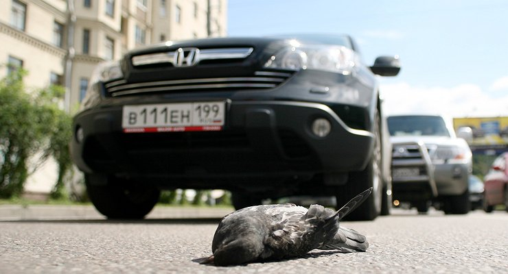 3народных способа быстро ибез последствий удалить следы птичьего помета скузова авто